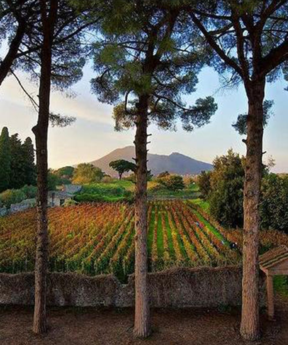 azienda_vinicola_tour_pompei