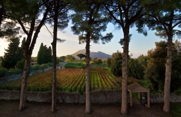 pompei wine farm