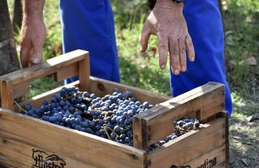 Wine pompei